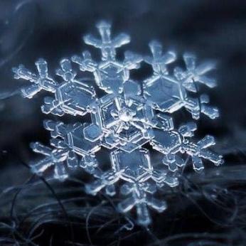The #IcePack Rises
