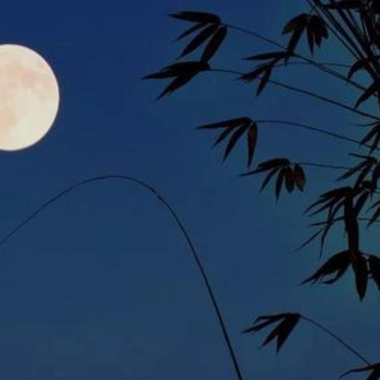 月光下的凤尾竹钢琴简谱 数字双手 倪维德