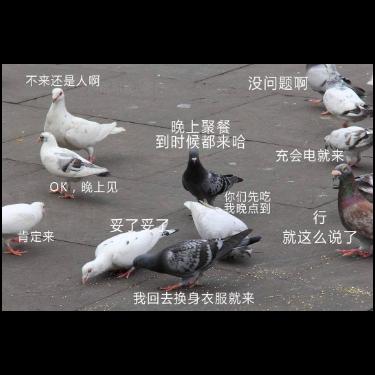 鸽子-钢琴谱