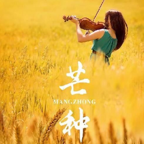 芒种(抖音版)小提琴段落 音阙诗听 赵方婧-钢琴谱