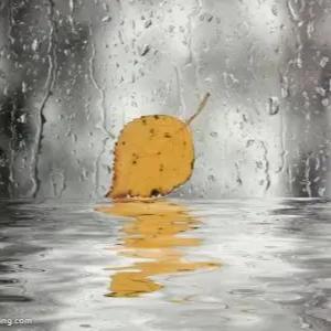 雨的印记 Kiss The Rain(简易版)